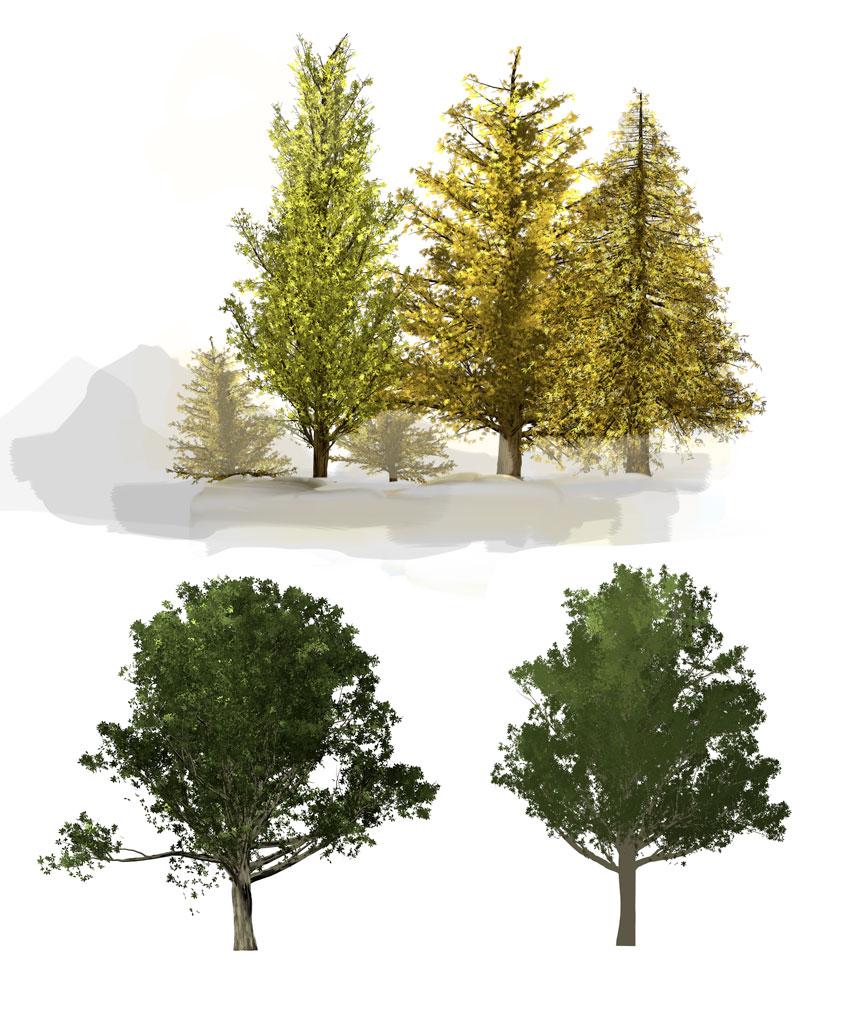 arbres4-cc